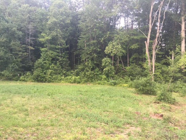 Lot is the wooded section. (back view of lot)