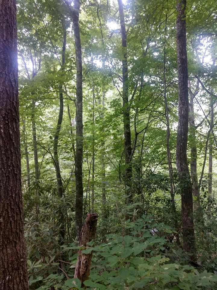 wooded section of lot